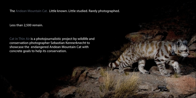 "Click on the image to see the ""Cat in Thin Air"" project website. Or read the blog post ""<a http://www.wildcatconservation.org/tag/leopardus-colocolo/"" target=""_blank"">In Search of the Wild Cats of the high Andes</a>""."